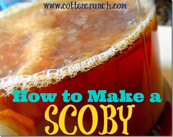 how-to-make-a-scoby_thumb