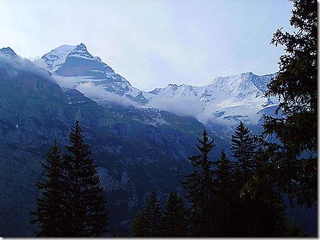 swiss alps & trees
