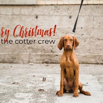 merry christmas card with dog
