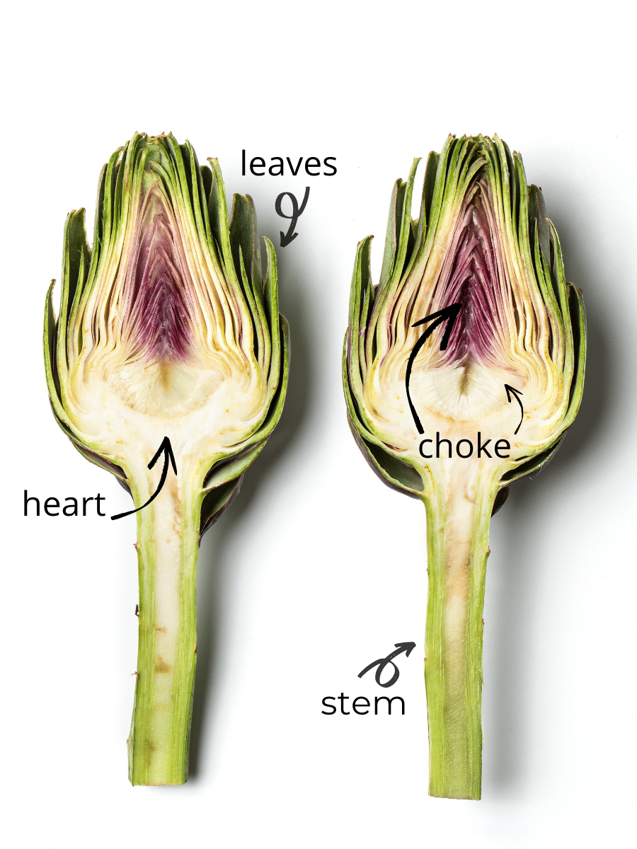 A close up bisection of an artichoke with arrows and labels showcasing the different parts.